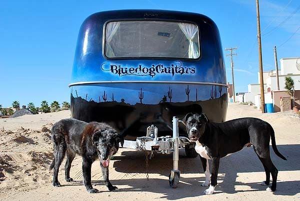 Bluedog Guitars Tiny Live Work Boler