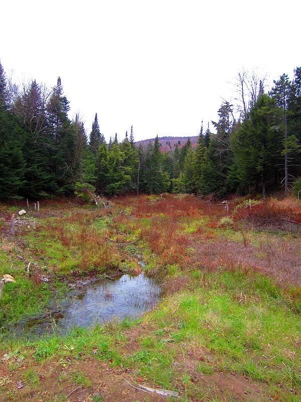 Vermon woods
