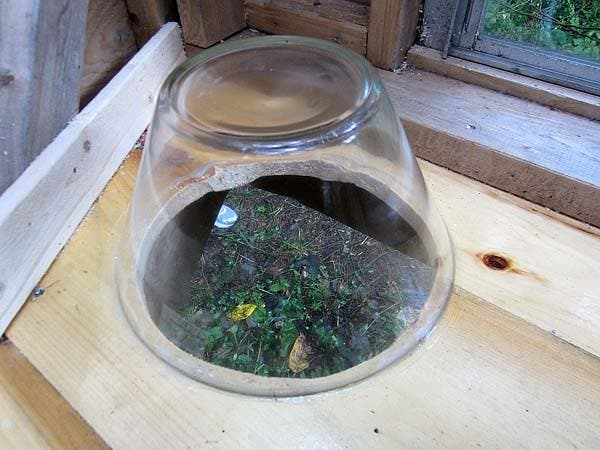 freebee bowl
