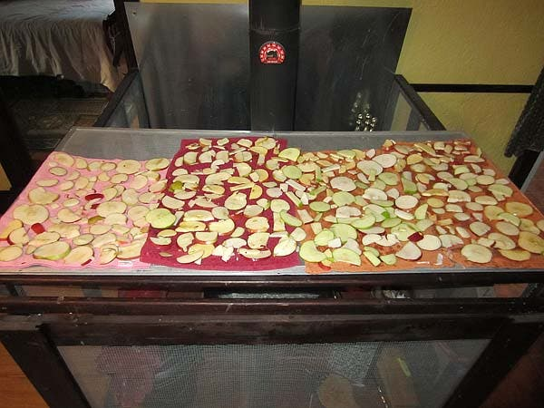 Dehydrating apple slices