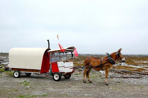 polly and wagon