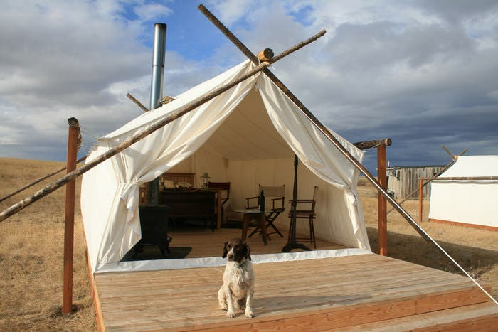 Dog_and_safari & Canvas Wall Tents