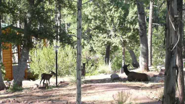 Elk at hermitage retreat center