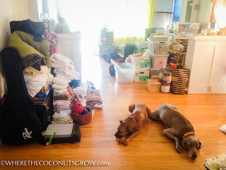 dogs and downsizing