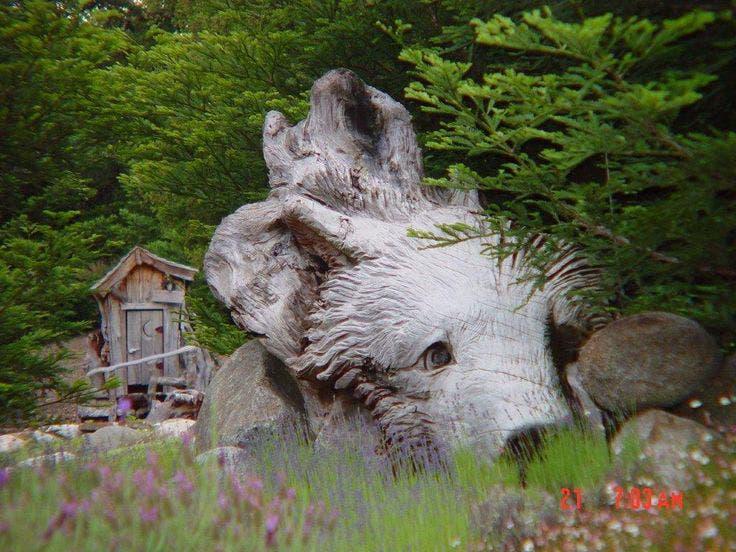 steve-blanchard-bear