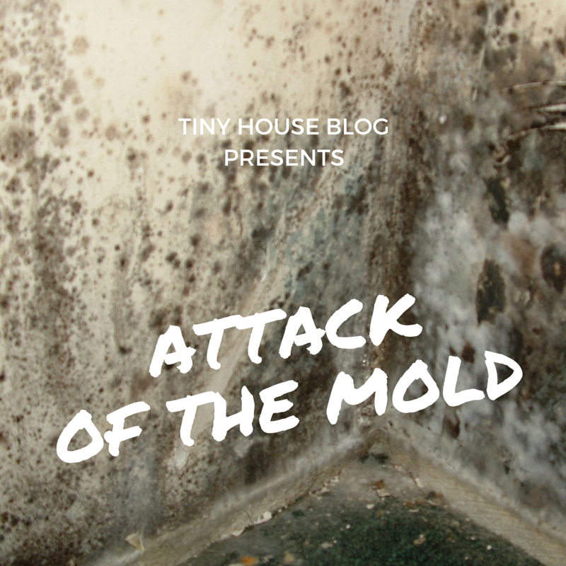 When Mold And Mildew Attack The Tiny