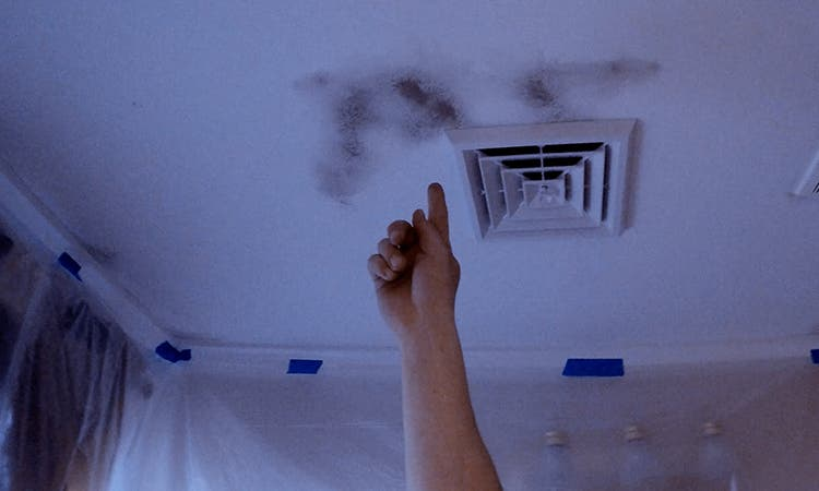 When Mold And Mildew Attack The Tiny Tiny House Blog