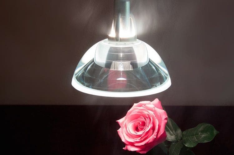 rose and lamp