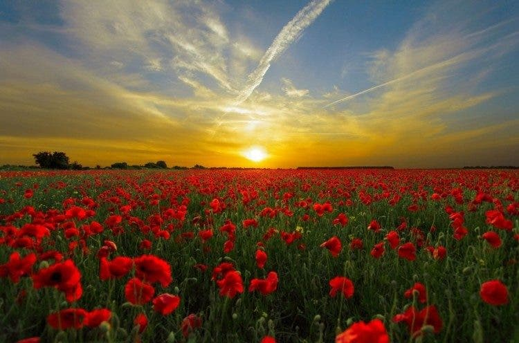 sunset-field-poppy-sun-priroda-large