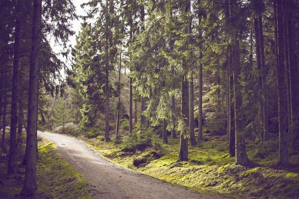 woods-692116_960_720