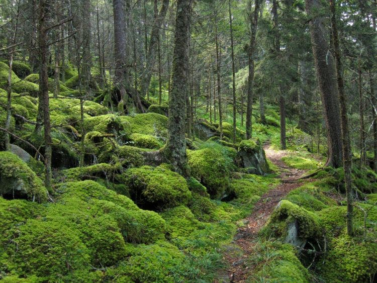 forest_on_baxter_creek_trail_in_great_smoky_mountains_national_park